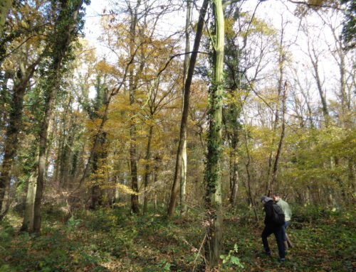 Bois de Beaulieu – Brétigny sur Orge