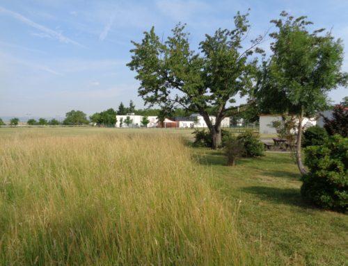 Audit et plan de gestion des espaces verts