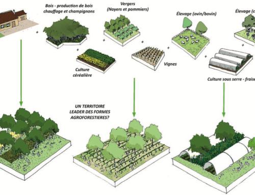Quelle forêt pour la transition territoriale ?